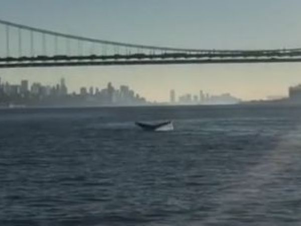 Whales spotted in NY waterways two days in a row