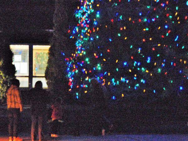 Christmas Tree Freehold Nj