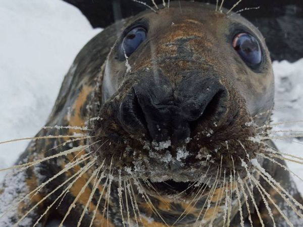 43-Year-Old Seal Passes Away at National Zoo