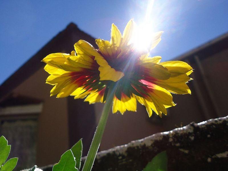 Sunligh  Warm Weather Continue Reston Va Patch