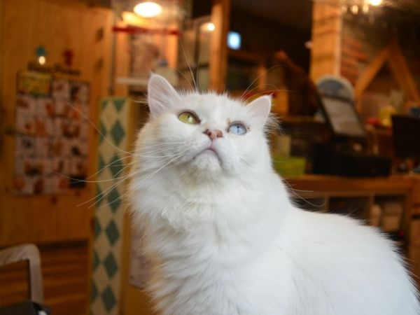 Boston Cat Cafe Opening