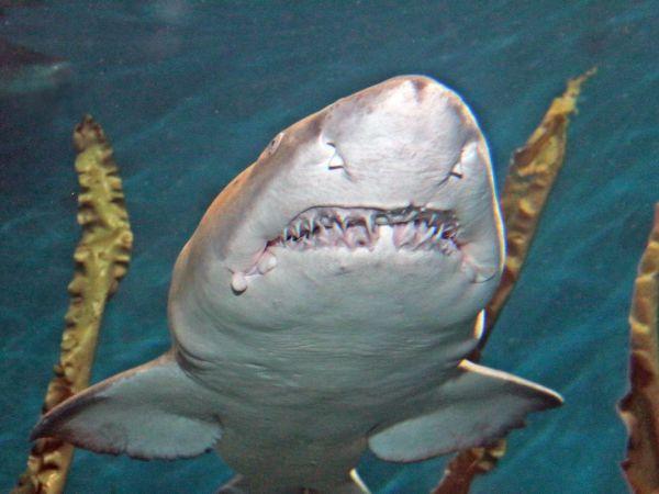 Maritime Aquarium Offers Free Admission For 39 Salute Norwak