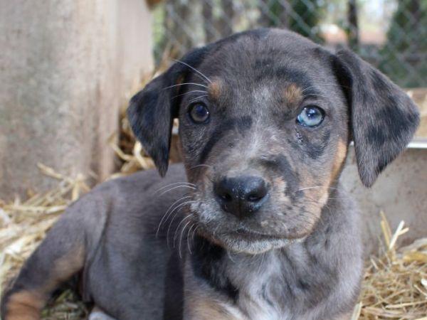 Cleveland Humane Society Dogs