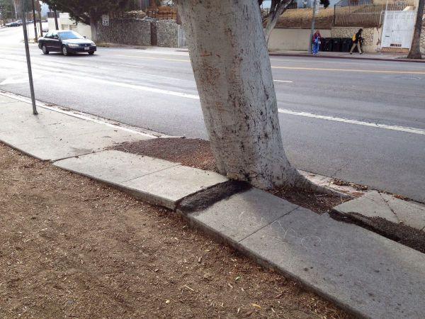 LA commits to $1.4 billion sidewalk repair plan