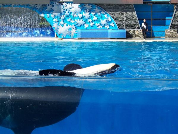 Famed Orca Dies as SeaWorld Ends Killer Whale Shows
