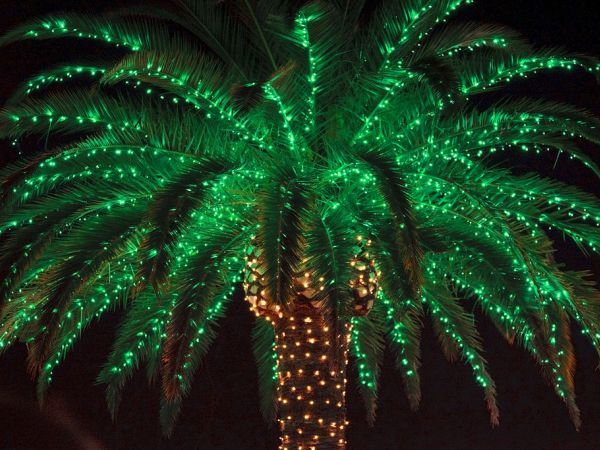 Holiday lights in the gardens set to open for season - Largo botanical gardens christmas lights ...