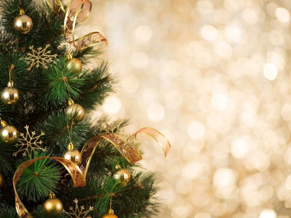 Agency asks for Christmas trees after holidays, for fish