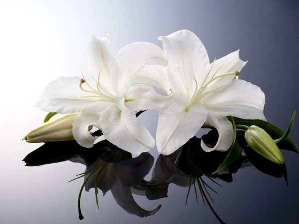 http://cdn20.patchcdn.com/users/22887534/20170118/020703/styles/T600x450/public/article_images/flowers_lily_funeral_obit_shutterstock_142002433-1484766410-9123.jpg