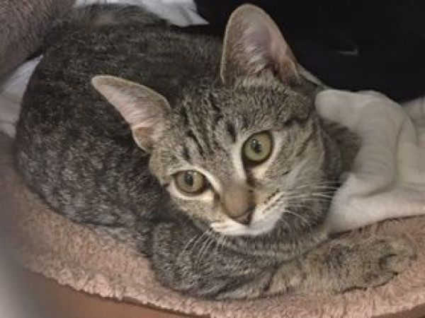 Cats For Adoption Fairfax Va
