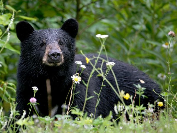 More than 300 bears killed in New Jersey hunt