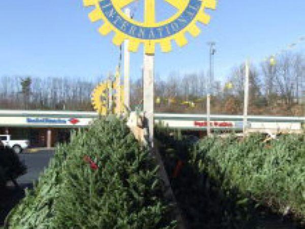 Christmas Tree Nashua Nh