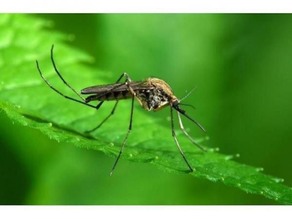2 more people diagnosed with West Nile virus