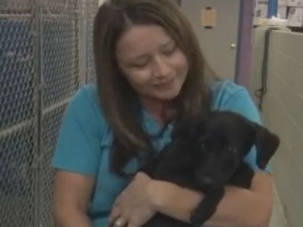 Cleveland APL takes in shelter dogs from SC after Hurricane Matthew