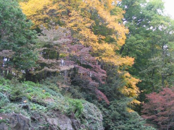 Leonard J Buck Garden At The Peak Of Fall Color