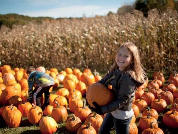 Fun Fall Activities Near Brentwood