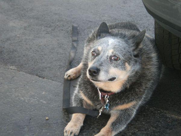 Dog Grooming Plymouth Ma