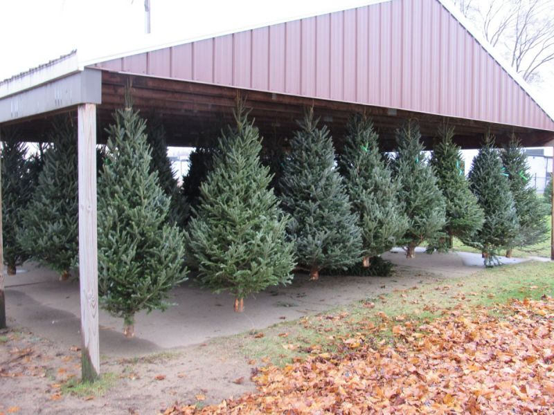 Christmas Trees Now On Sale At The Plymouth VFW Post