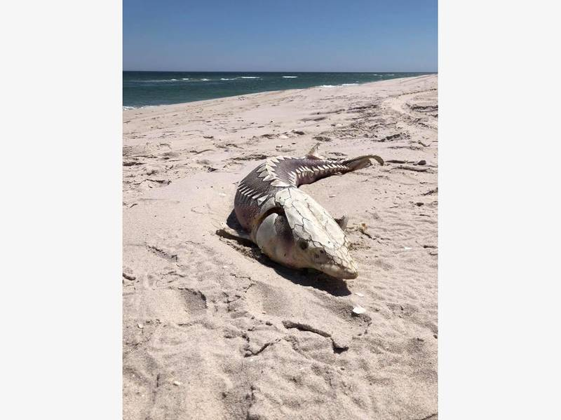 A creepy find at island beach state park berkeley nj for Island beach state park fishing
