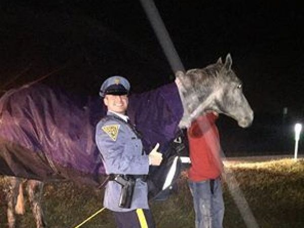 Horse is struck and killed on Atlantic City Expressway