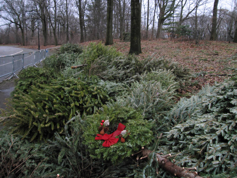 Christmas Tree Recycling In Philadelphia: When, Where, And How |  Roxborough, PA Patch - Christmas Tree Recycling In Philadelphia: When, Where, And How