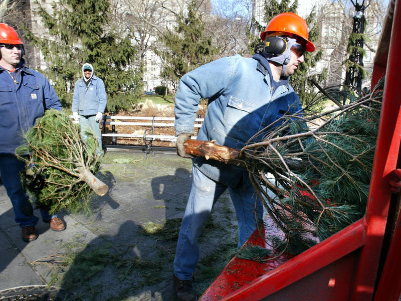 NYC's 'Mulchfest' Turns Parks Into Xmas Tree Recycling Centers - NYC's 'Mulchfest' Turns Parks Into Xmas Tree Recycling Centers