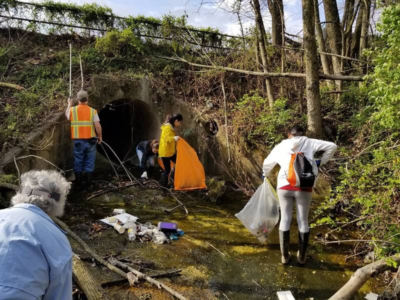 ... Sterling Parks Cabin Branch And Muddy Branch Creeks Cleaned   ...