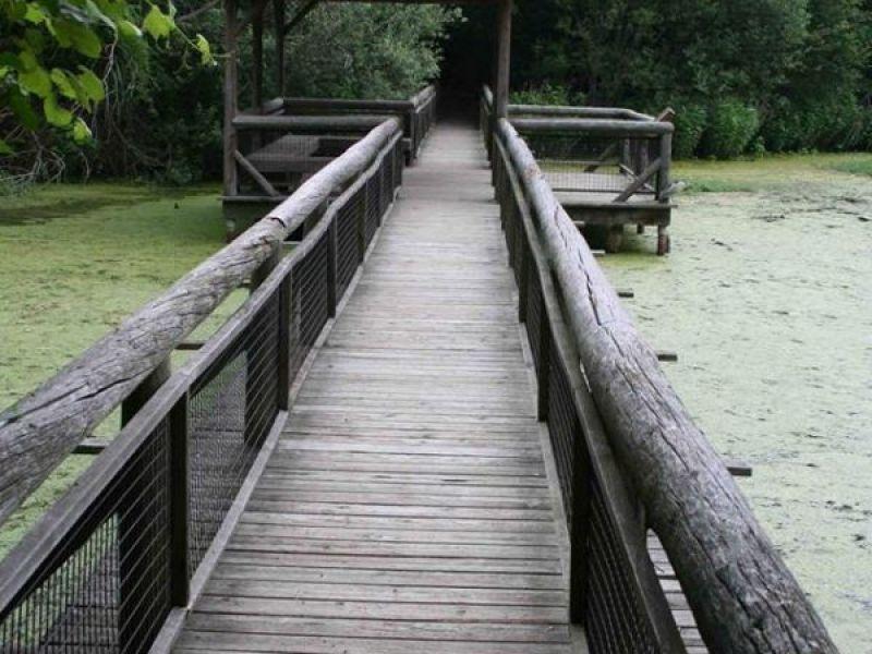 The Sasqua Garden Club Announces Landscape Restoration At