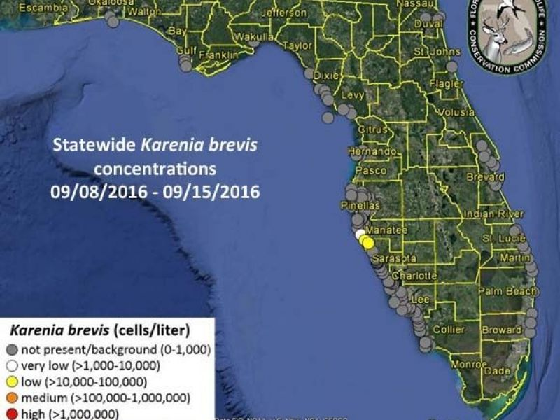 Red Tide Detected In Gulf Coast Counties Sarasota FL Patch - Map of gulf coast florida