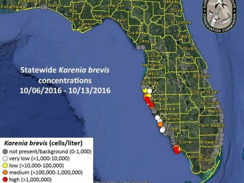 Citrus Cove Florida Map.Red Tide Continues To Cause Problems In Sarasota Pinellas And
