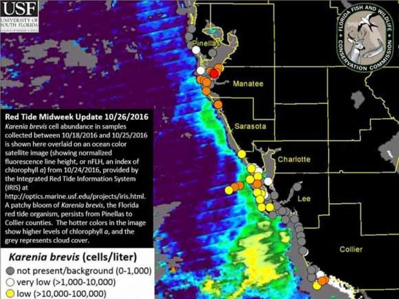 Patchy Red Tide Bloom Persists Off Florida S Gulf Coast Bradenton