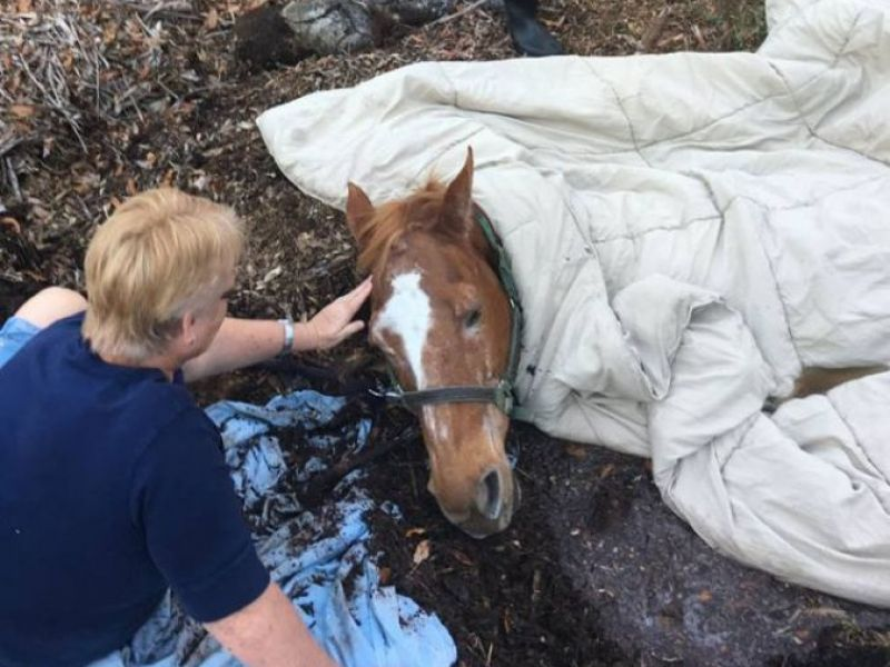Photos: Horse Trapped in 6 Feet of Muck Rescued | Lakeland ...