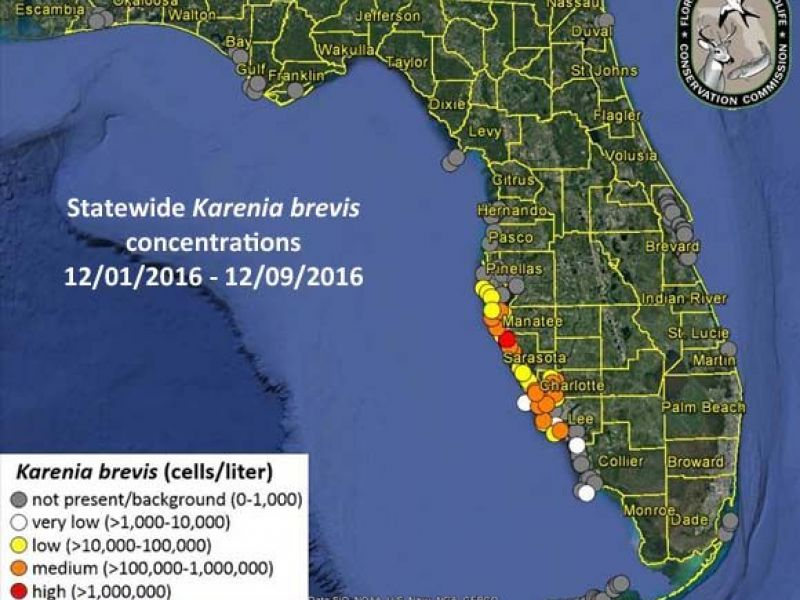 Red Tide Concerns Persist In Tampa Bay Area Counties St Pete Fl