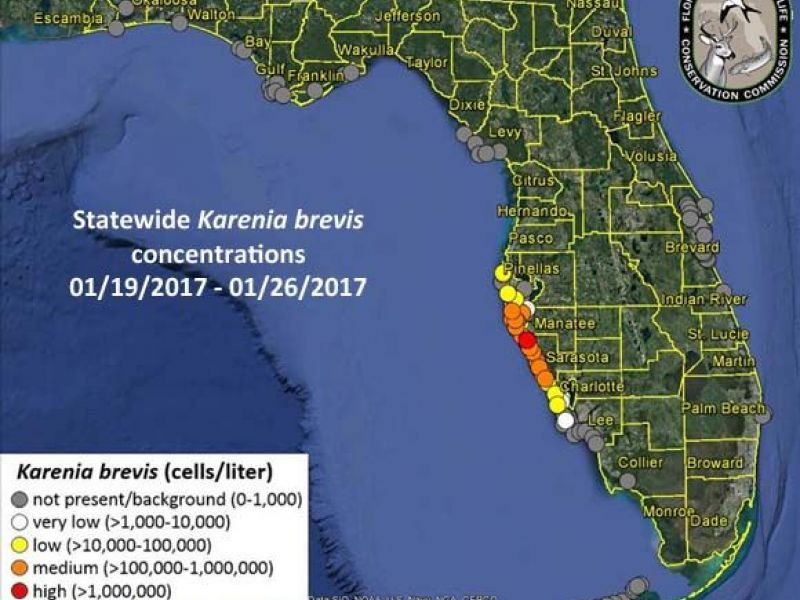 Red Tide Woes Continue Along West Florida Coast Sarasota Fl Patch