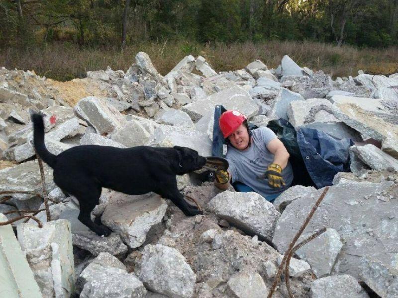 Lakeland Fire Dog Earns FEMA Credentials   Lakeland, FL Patch