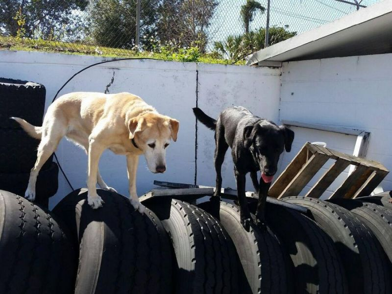 Tampa Pets Craigslist - Best Car News 2019-2020 by ...
