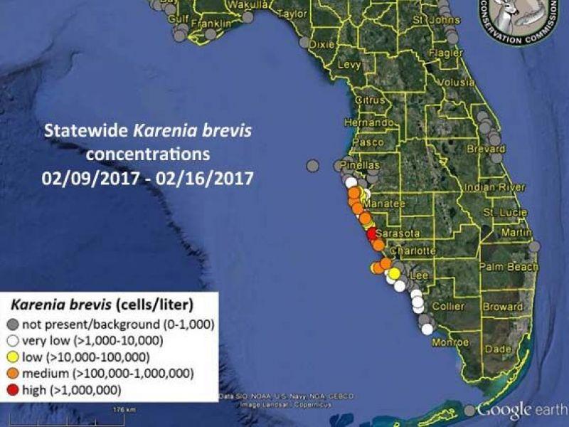 Red Tide Fish Kills Respiratory Concerns Continue Sarasota Fl Patch