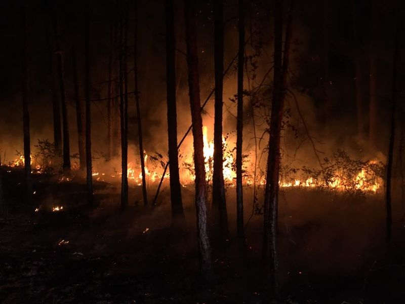 Florida On Fire 125 Blazes Worst Wildfire Season Tampa Fl Patch