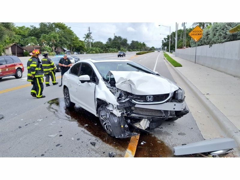 Divebombing Spider Causes Car\'s Crash Into Pole | Sarasota, FL Patch