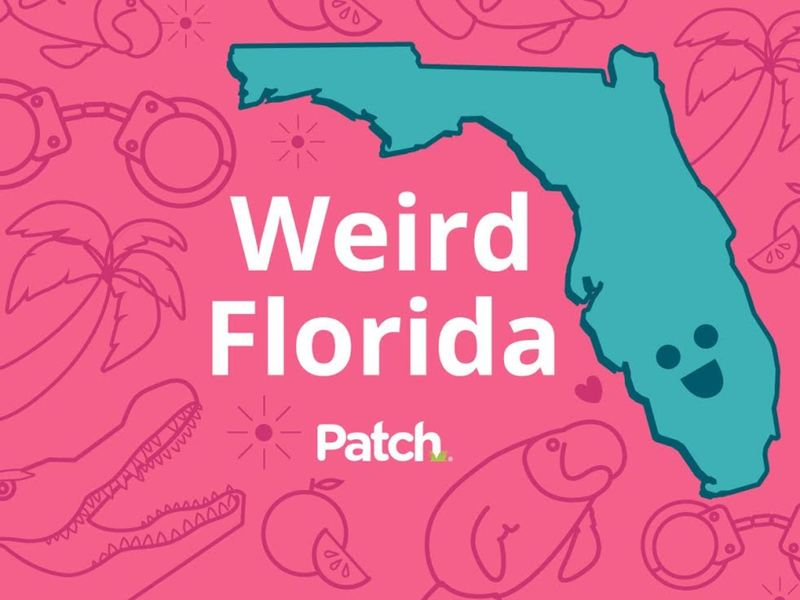 Spider Causes Crash Fake Cop Busted Weird Florida Land O 39 Lakes Fl Patch