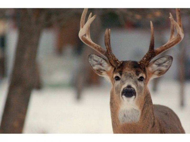 Crashes Involving Deer On The Rise In Pennsylvania: Here Are Safety Tips For Mating Season