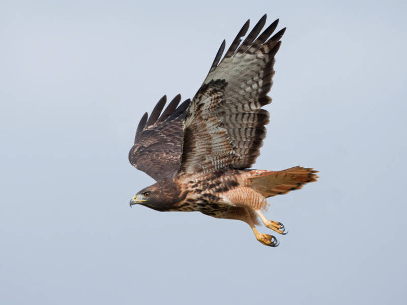 Bird Kills Dog In Bucks Co Spca Confirms Doylestown Pa Patch