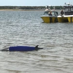 See Photos of Rescued Whale, Saved By Sea Of Heroes