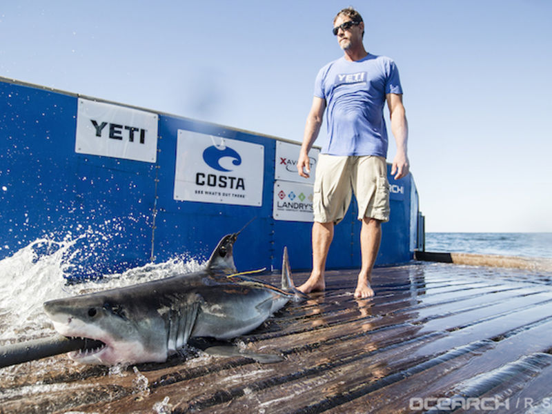 First shark pup tagged off montauk is back for season for Montauk shark fishing