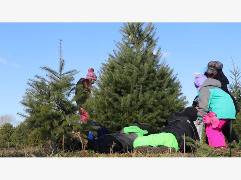 Santa's Christmas Tree Farm In Cutchogue, Family Tradition ...