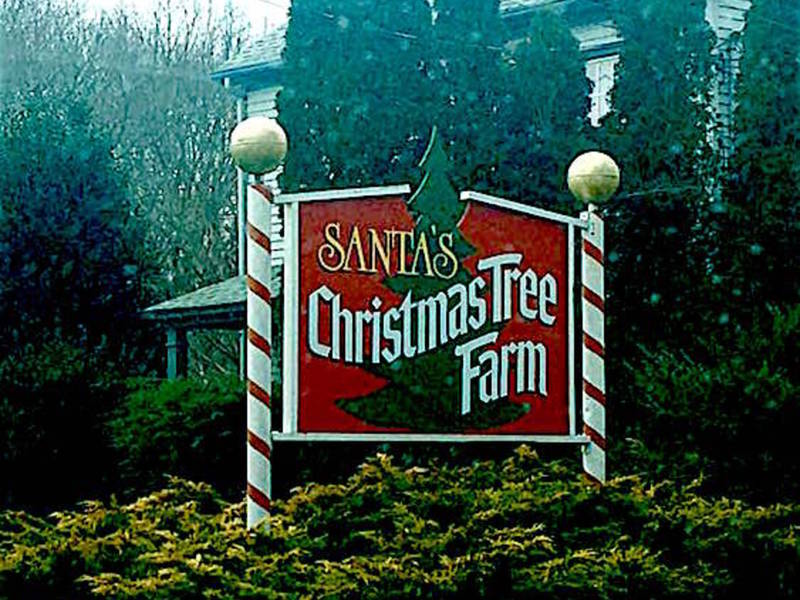 santas christmas tree farm for sale in cutchogue