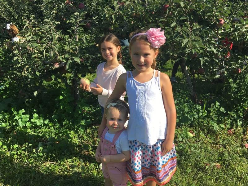 Apple Picking Fun For 1st Graders At Wickham's Fruit Farm: Photos