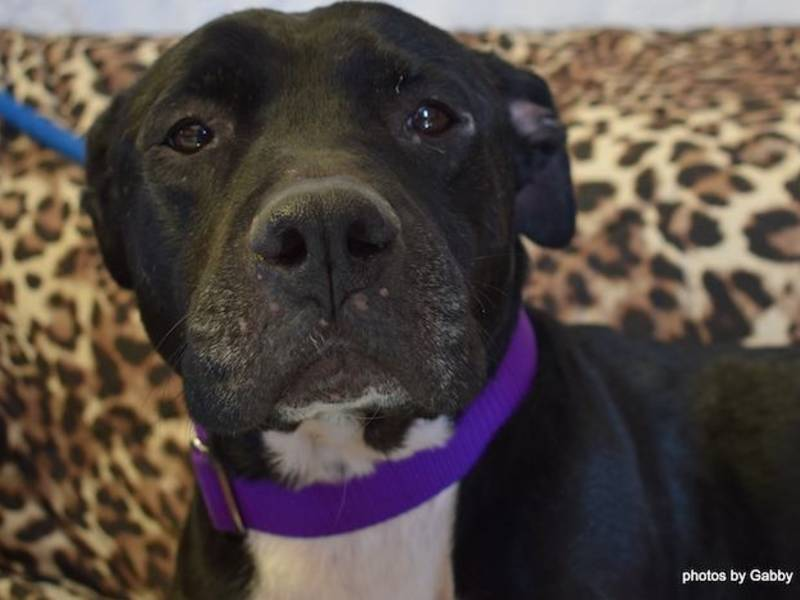 Shelter Dog Joyfully Reunited With Owner After Patch Article