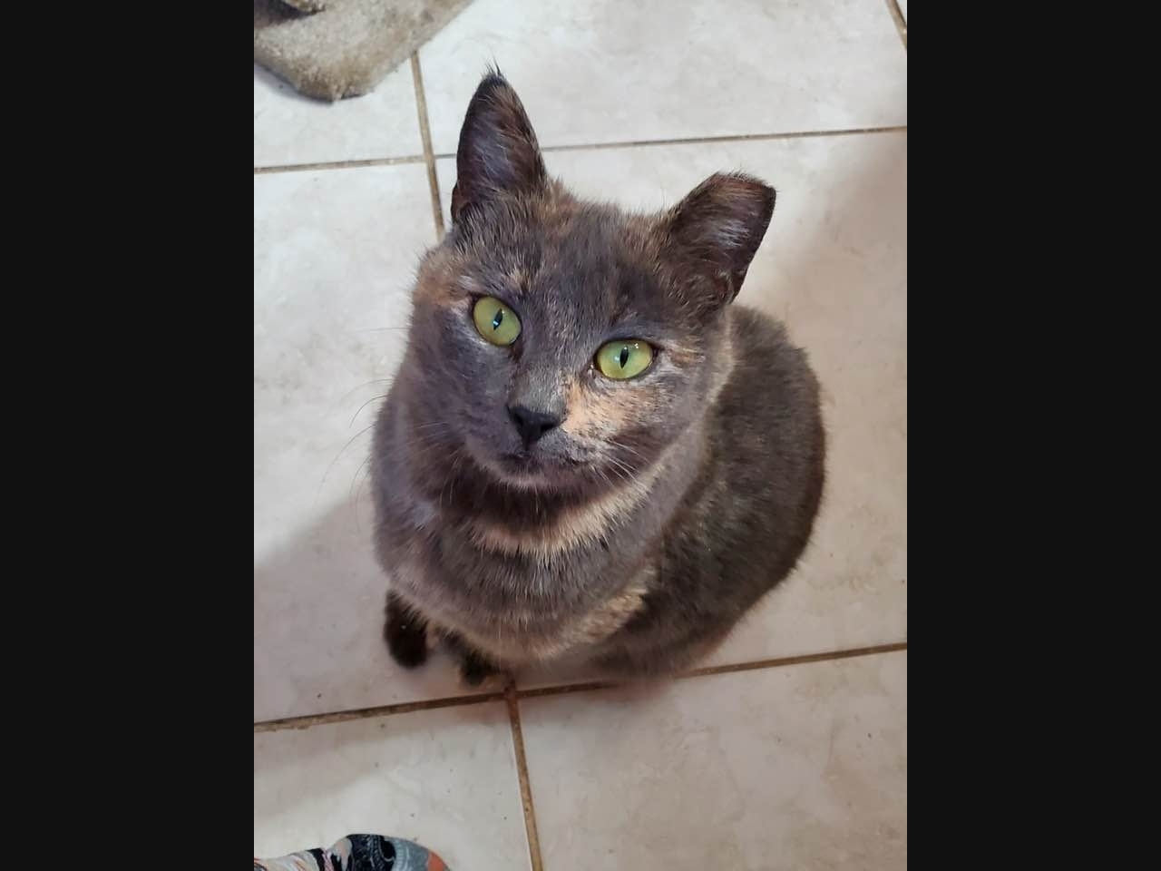 Woman's Heartbreaking Search For Cat Lost Before Christmas