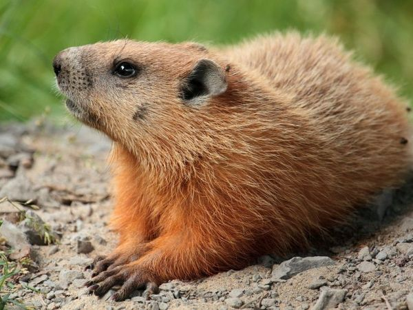 Groundhog Day And Predictions Spring Real Estate Market