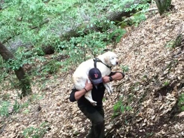 Family's Blind Dog Missing For 7 Days Found Alive In Stream